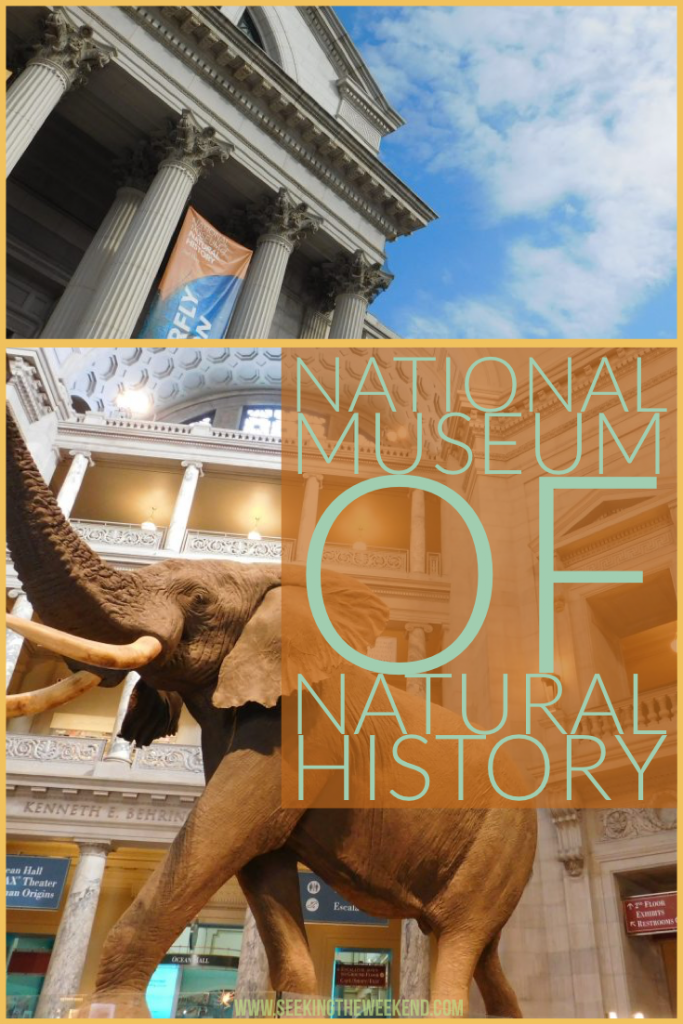 The National Museum of Natural History is a Smithsonian museum in Washington D.C. See some things you can do in this museum that offers FREE admission!